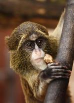 monkey.shy
