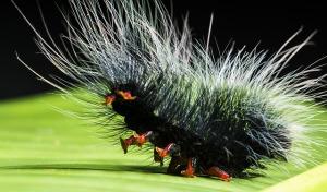 caterpillar-399166_640