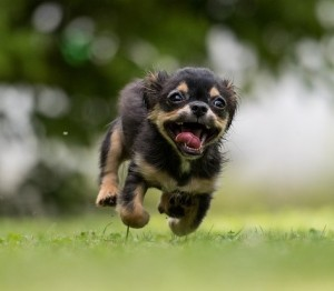 enthusisatic-pup